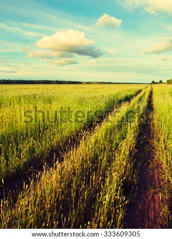 Field dirt road stretched into infinity on a summer evening