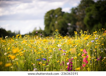 field flowers - stock photo