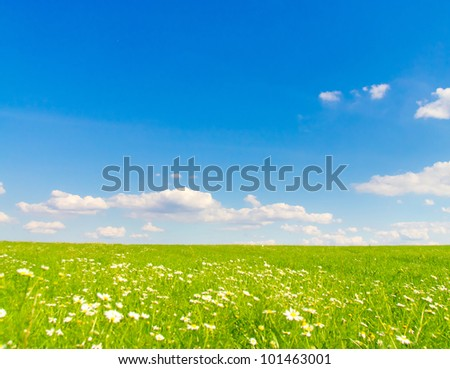 Field Flowers bloom Farm - stock photo