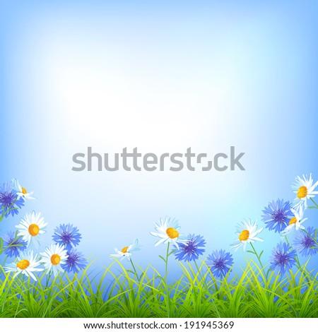 Field flowers (daisy, cornflower), blue sky, green grass summer day natural  background - stock photo