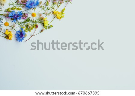 Field flowers on a white background