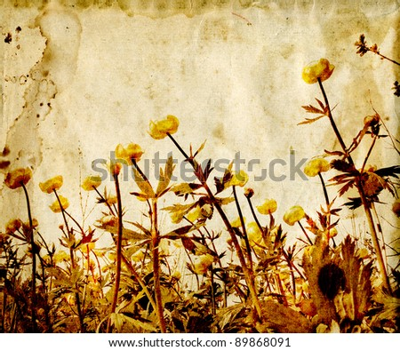 field flowerses on aging paper - stock photo