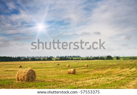 Field full of bales against tender sun in the blue sky. - stock photo