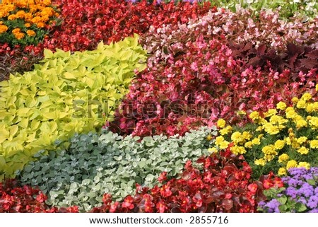 Field full of of assorted flowers - stock photo