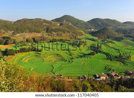 Field full of rapeseed in Luoping , Yunnan , China - stock photo