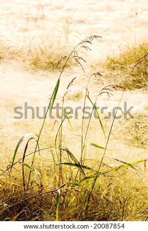 Field full of soft dry grass. Suggestive warm daylight due to the drops of dow on the stems and spikes. Texture, autumn background.  Serenity concept. Space for copy. - stock photo
