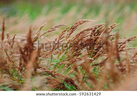 Field Grass Green Russian Stock Images, Royalty-Free Images ...