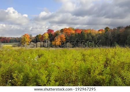 Field in Autumn - Focus on Trees - stock photo