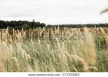Field in autumn horizontal