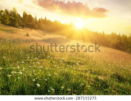 Field in mountains during sunrise. Natural landscape - stock photo