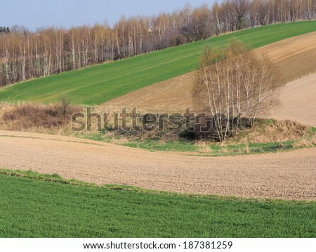 Field in spring in countryside - stock photo