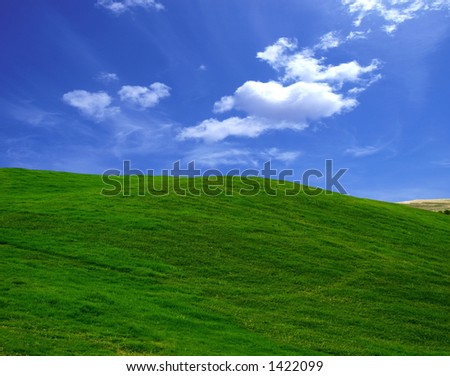field in summer - stock photo