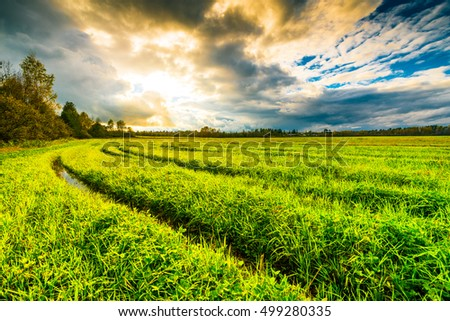 Field in the forest with wheel tracks at sunset and autumn sky. The view from grass level