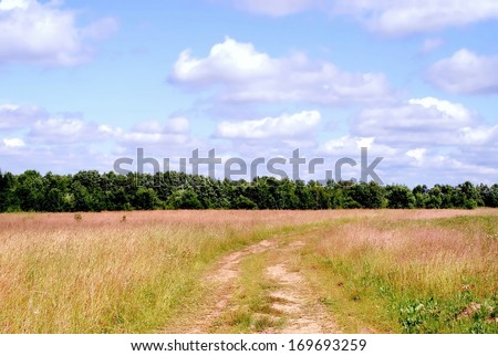 Field landscape  - stock photo