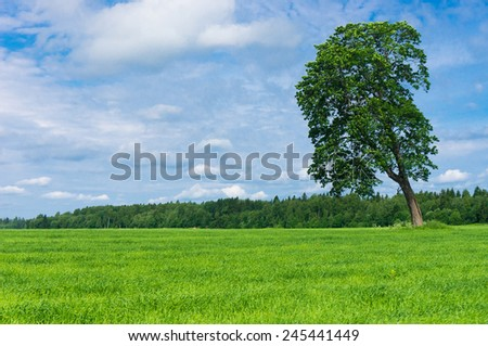 Field Landscape Nobody Outside  - stock photo