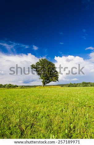 Field Landscape Vibrant Summer  - stock photo