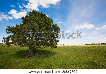 field landscape with trees and blue sky