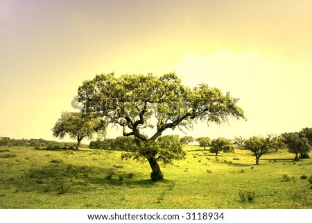 field landscape with trees at sunset - stock photo