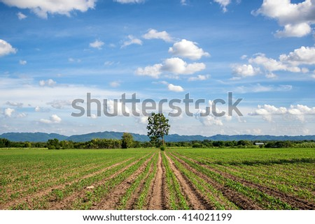 field , meadow , tree and blue sky composition of nature - stock photo