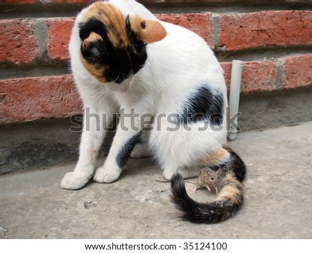 Field mouse plays with a tail of a cat - stock photo