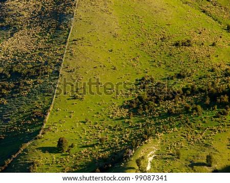 Field New Zealand - stock photo