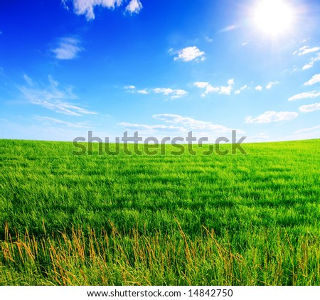 Field of a green grass and the solar blue sky