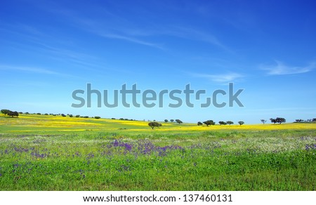 Field of Alentejo  at Spring time