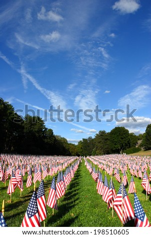 Field of American Flags   - stock photo