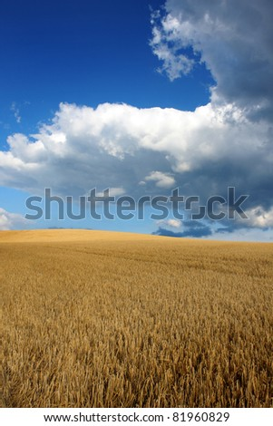 Field of Barley with cloudy sky - stock photo