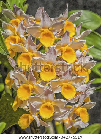 Field of cattlyea orchids,photo art - stock photo