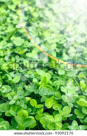 Field of clover - stock photo