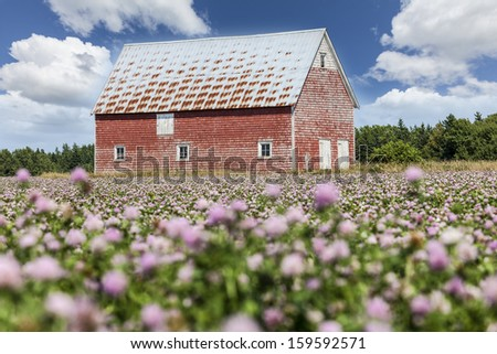 Field of clover and an old red barn in rural Prince Edward Island, Canada. - stock photo