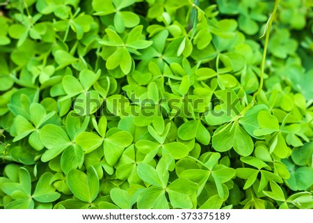 Field of clover. Selective focus - stock photo