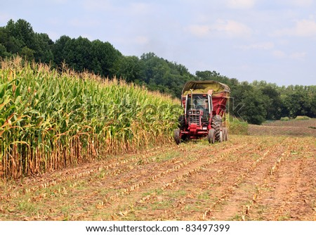 Field of corn being harvested in the late summer - stock photo