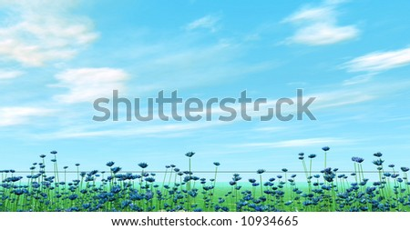 Field of cornflowers