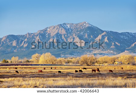 Field of cows before a large mountain in morning with bare winter trees - stock photo