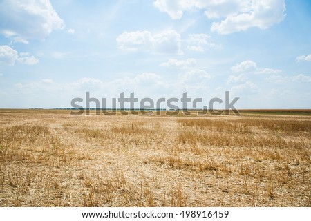 Field of crops after harvesting in the summer