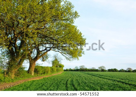 Field of Crops in Spring - stock photo