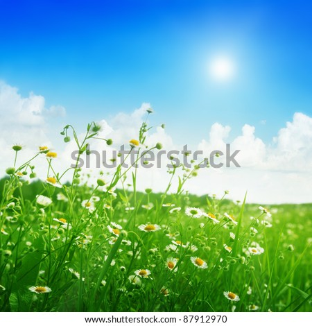 Field of daisies and sun on the sky. - stock photo