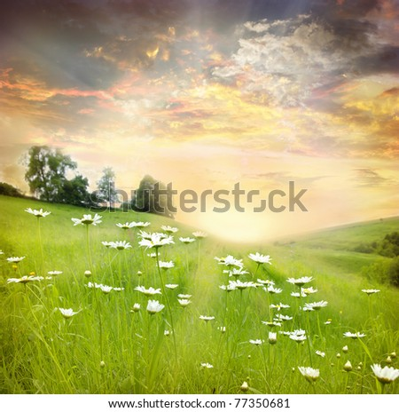 Field of daisies, blue sky and sun. - stock photo