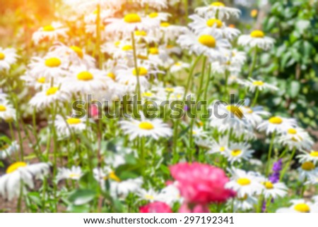 Field of daisy flowers blur background with shallow depth of field bokeh effect - stock photo