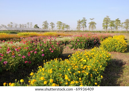 field of flower and blue sky