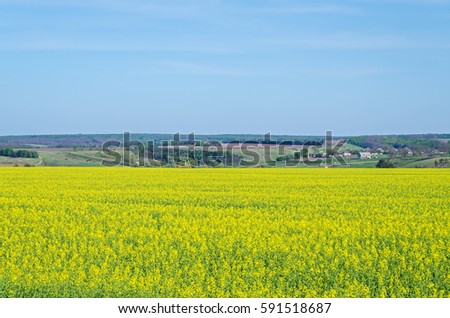 stock-photo-field-of-flowering-canola-at