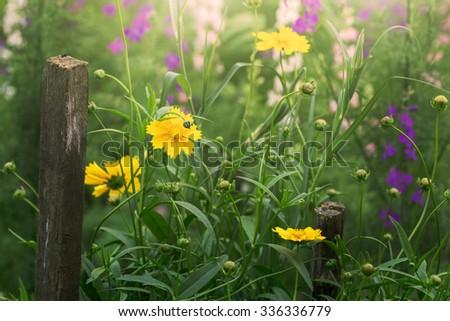 field of flowers - stock photo