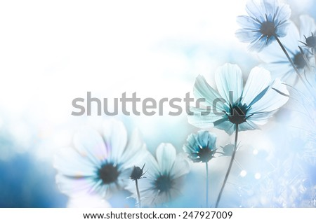 Field of flowers and sunlight  - stock photo