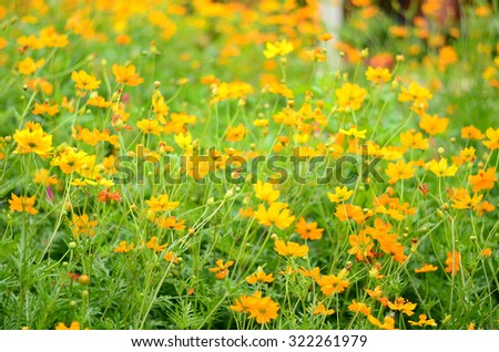 Field of flowers, Flowers background - stock photo