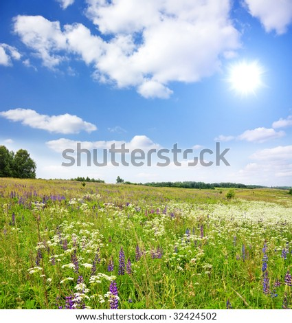 field of flowers, summer landscape - stock photo