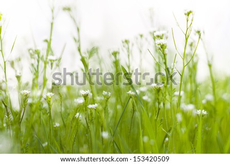Field of flowers with blurred green background. - stock photo