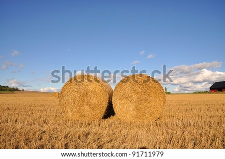 Field of freshly cut bales of hay a sunny day. - stock photo