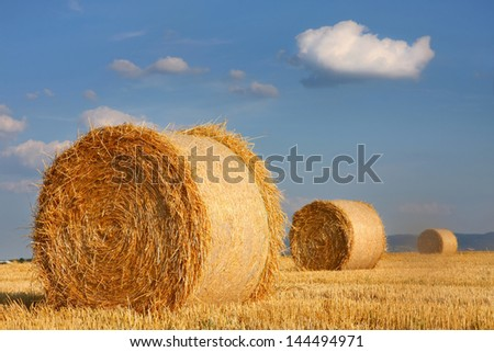 Field of freshly cut bales on farmer field
